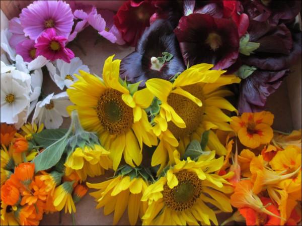 Blüten-Mischung
