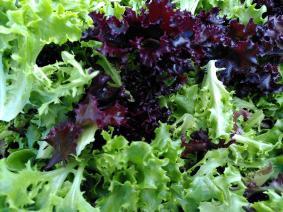 Schnittsalat aus Sieben Linden